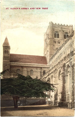Title: St Alban's Abbet & Yew Tree - Publisher: No info - Date: circa 1903 (Inland message only)